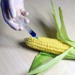Genetically Modified Foods: Why You Should Avoid Them