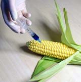 Avoid Genetically Modified Food
