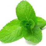 The Lung Cleansing Benefits of Peppermint