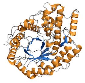 Barley Beta-Amylase Crystal Structure