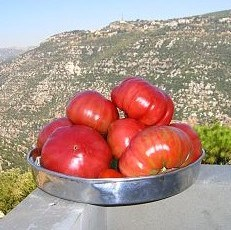 Organic Tomatoes Or Conventional Tomatoes