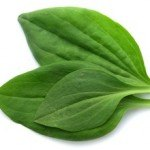 Health Benefits of Plantain Leaf