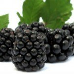 Study: Eating Black Raspberries May Help Prevent Colon Cancer