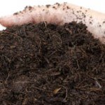 99 Things You Probably Didn't Know You Can Compost