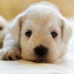 9 Ways to Reduce Symptoms of Pet Allergies
