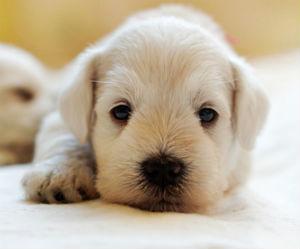 resting-puppy.jpg