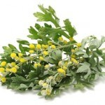 Harmful Organism Cleansing: The Benefits of Wormwood