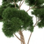 The Lung Cleansing Benefits of Eucalyptus
