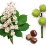 The Health Benefits of Horse Chestnut
