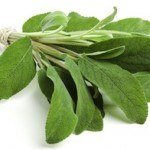 The Benefits of Sage for Halitosis (Bad Breath)