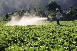 Farmer spraying Bt toxin