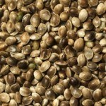 Benefits of Hemp Seed