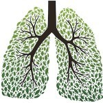 The 9 Best Herbs for Lung Cleansing and Respiratory Support