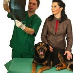 The Benefits of Chiropractic for Animals