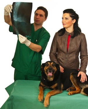 Dog being evaluated for chiropractic care