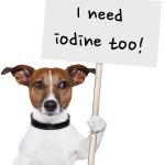 8 Things You Need to Know About Iodine Deficiency in Dogs