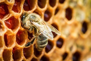 Propolis is a resin produced by bees