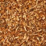 3 Benefits of Catuaba Bark for Women