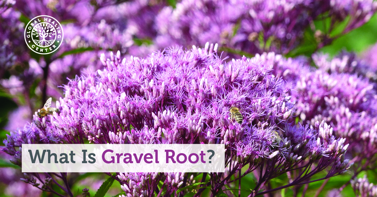 What Is Gravel Root