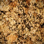 What Is Pygeum Bark and Can It Help Prostate Health?