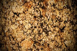 Pygeum-bark-prostate-health