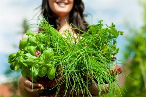 herbs-for-female-health