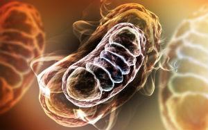 mitochondria-3D