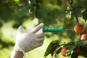 injecting-fruit-with-chemical