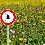 The 4 Scariest Things About Lyme Disease