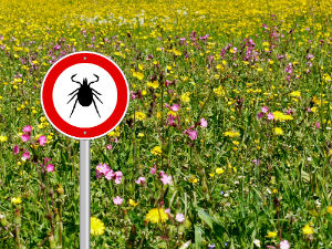 field-of-flowers-with-tick-sign