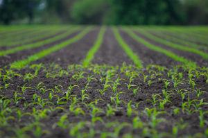 sprouts-farm-in-soil