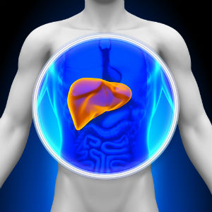 animated-liver-and-body