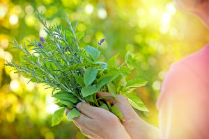woman-holding-fresh-herbs