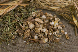 dried-chicory-root-and-herbs