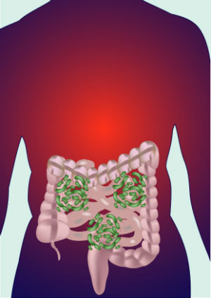 Gut Bacteria for Liver Protection