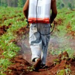 Evidence Mounts on Roundup's Link to Liver and Kidney Damage