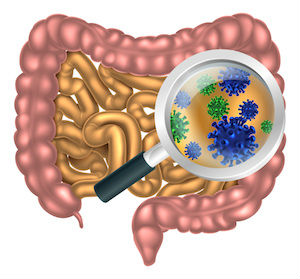 Probiotics in the gut