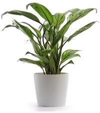 Houseplants like this can help you overcome signs of sick building syndrome