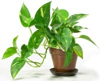 Scattering houseplants like this one throughout a building can help improve air quality and other environmental factors.