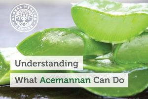 Acemannan is a polysaccharide and the single most important molecular component in aloe vera.