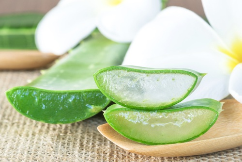 Aloe vera is a succulent plant with many health benefits that has been used throughout the world for thousands of years.