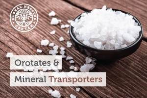 Orotates and mineral transporters can beneficial to health as they provide bioavailable nutrition to support cells and their cellular functions.