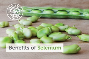 These fresh lima beans are a great source of selenium, an essential mineral with many benefits to your body. What a great, nutritious snack!