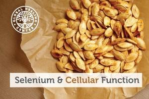 Basket of pumpkin seeds. Pumpkin seeds contain high amounts of the trace mineral selenium, a potent antioxidant.