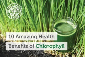 There are many health benefits of Chlorophyll such as helping control body order and hunger. A glass of a leafy green drink.