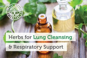Two bottles of oregano oil surrounded by herbs. There are many different types of herbs that are great for lung cleansing.