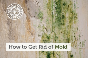 Wall infested with mold. Mold is dangerous to your health and anyone with this problem should take steps to get rid of mold.