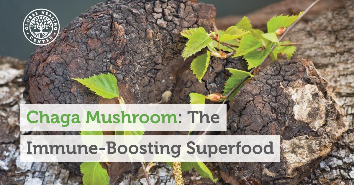 Chaga Mushroom The Immune Boosting Superfood