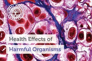 A microscopic view of a harmful organism. Harmful organisms like pinworms can cause sleeping problems and joint inflammation.