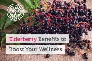 A bunch of elderberries. Elderberries are believed to possess many benefits including skin protection properties.